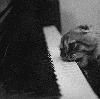 cat eating piano
